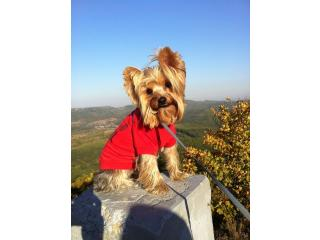 Harry Pottery from Bertibono [], Yorkshire terrier